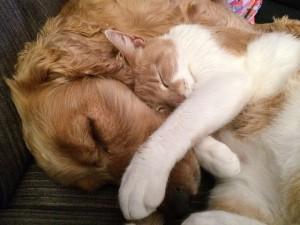 Kvalitní žrádlo pro psy a kočky