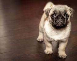 Pamlsky pro psy jako skvělý doplněk stravy
