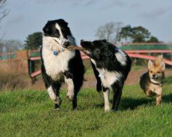 Jaká psí plemena jsou vhodná pro rodiny?