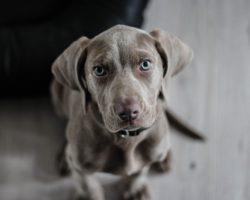 Arden Grange a Marp představují psí značku kvality
