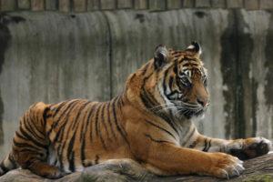 Tip na rodinný výlet: Zoo Jihlava, zoo bez mříží