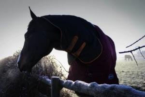 3 tipy, jak správně vybrat deku pro koně