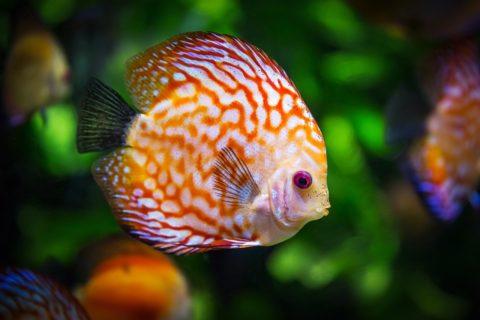 Jak správně založit dno akvária